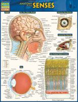 ANATOMY OF THE SENSES